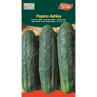 SEMILLAS PEPINO ASHLEY