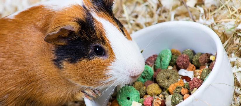 comida conejos