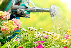 elegir kits de jardinería