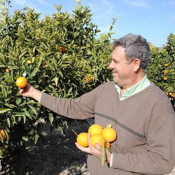 naranjas costa del sol