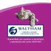 Whiskas Premios en Forma de Sticks para Gatos Sabor Pollo 18gr