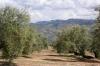 Selección Cd,  6 Garrafas 2l. Aceite De Oliva Virgen Extra Picual (jaén)