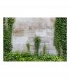Fotomural - The Forgotten Garden , Tamaño - 250x175