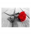 Fotomural - Abandoned Rose , Tamaño - 100x70
