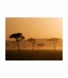 Fotomural - Massai Mara , Tamaño - 350x270