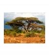 Fotomural - En La Reserva Nacional Samburu, Kenia , Tamaño - 250x193