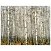 Impresión Sobre Lienzo - Denso Bosque De Abedules Cm. 80x100