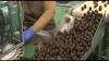 Fruta De Aragón Bañadas En Chocolate 1kg