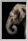 Panorama® Poster Con Paspartú Elefante Perfil 35x50cm | Impreso En Papel De Alta Calidad De 250gr | Poster De Animales  | Cuadros Decorativos Animales | Cuadros Salón Modernos | Cuadros Dormitorio