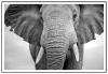 Panorama® Poster Con Paspartú Elefante 70x50cm | Impreso En Papel De Alta Calidad De 250gr | Poster De Animales | Cuadros Decorativos De Animales | Cuadros Salón Modernos | Cuadros Dormitorio