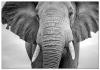 Panorama® Lienzo Elefante 70x50cm | Impreso En Lienzo Alta Calidad Con Bastidor | Cuadros Decoración Salón | Cuadros Para Dormitorio | Cuadros Lienzos Decorativos | Cuadros Modernos Zen