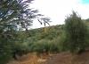 Polvo Aceite De Oliva Virgen Extra. Tarro 50ml. Olivar De Castro