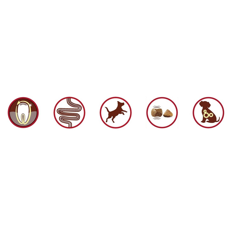 Purina ONE MINI Pienso para Perro Adulto Buey y Arroz 1,5Kg - 4