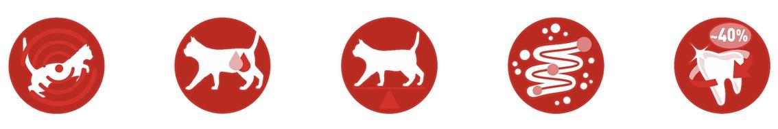 Purina ONE Pienso para Gato Adulto Esterilizado Salmón y Trigo 1,5Kg - 4