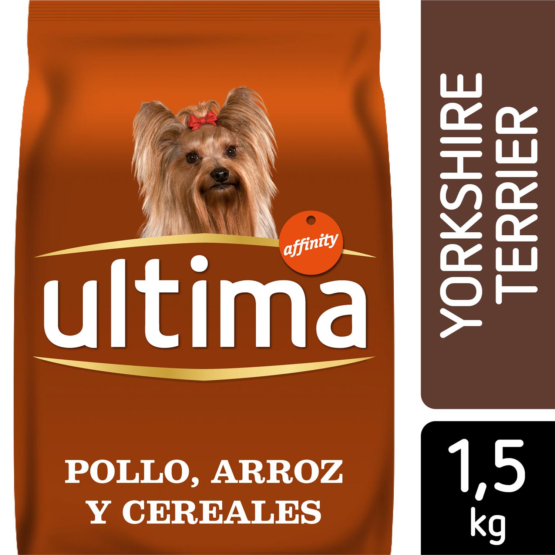 Alimento Perro Seco Adulto Yorkshire -