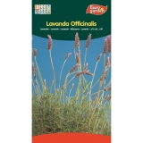 SEMILLAS LAVANDA OFFICINALIS