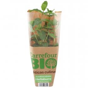 Hierbabuena ecológico Carrefour Bio maceta