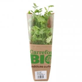 Cilantro ecológico Carrefour Bio maceta
