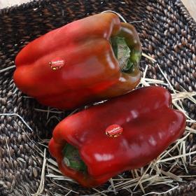 Pimiento rojo Premium granel