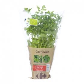 Perejil liso ecológico Carrefour Bio maceta