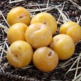 Ciruela amarilla Premium granel