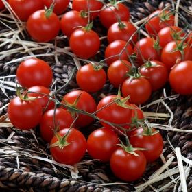 Tomate Cherry Rama Premium granel