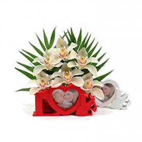 Cesta de orquídeas Carrefour 6 ud
