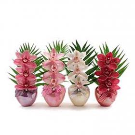 Cesta orquideas Flores Frescas 3 ud