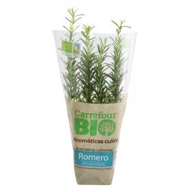 Romero ecológico Carrefour Bio granel maceta