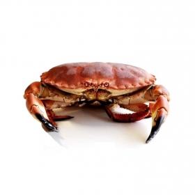 Buey de mar cocido Globalimar pieza 1 Kg