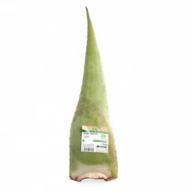 Aloe vera ecológico Carrefour granel maceta