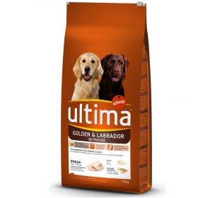 Alimento Perro Seco Adulto Golden Retriever