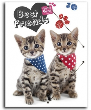 Carpeta Gomas A4 Polipropileno Studio Pets Cat