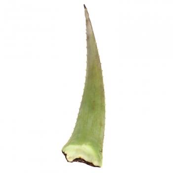 Aloe vera ecológico Carrefour Bio 250 g