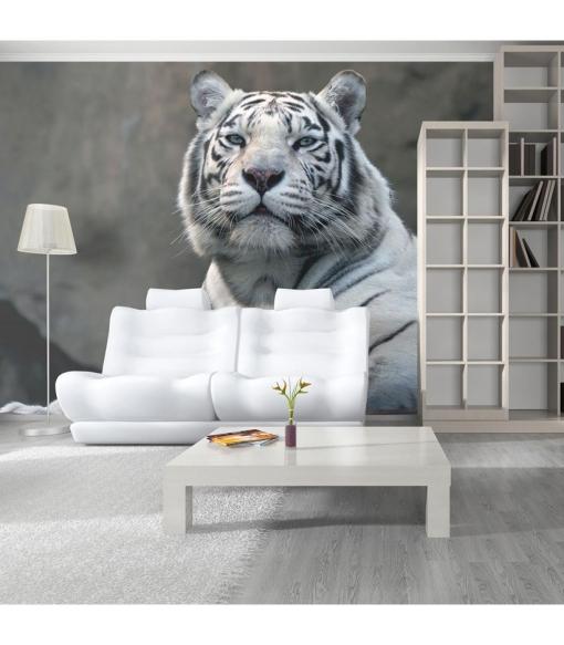 Fotomural - Tigre De Bengala En El Zoo , Tama�o - 400x309