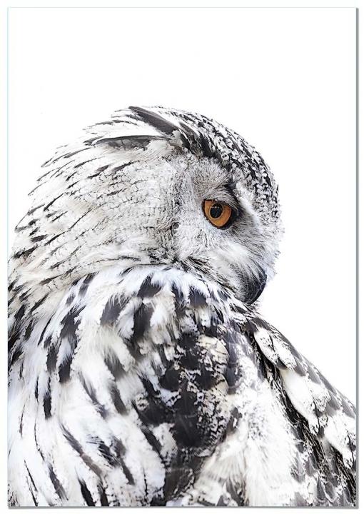 Panorama® Poster Lechuza Izquierda 35x50cm   Impreso En Papel De Alta Calidad De 250gr   Poster De Animales   Cuadros Decorativos De Animales   Cuadros Salón Modernos   Cuadros Dormitorio