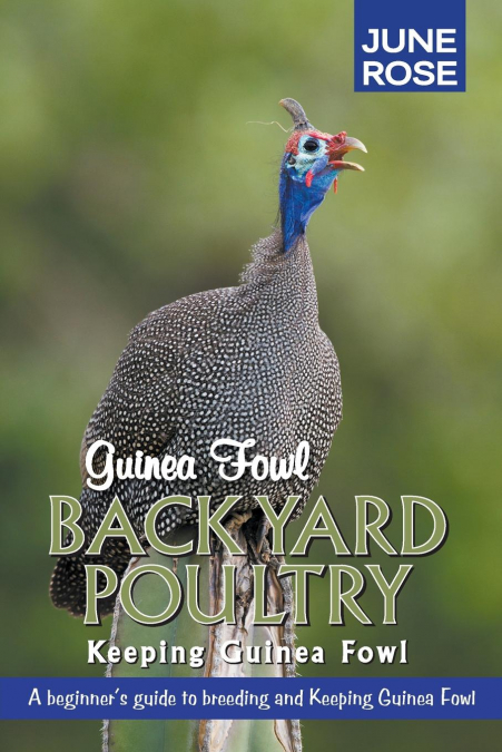 Guinea Fowl, Backyard Poultry
