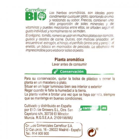 Perejil liso ecológico Carrefour Bio maceta 1 ud - 1