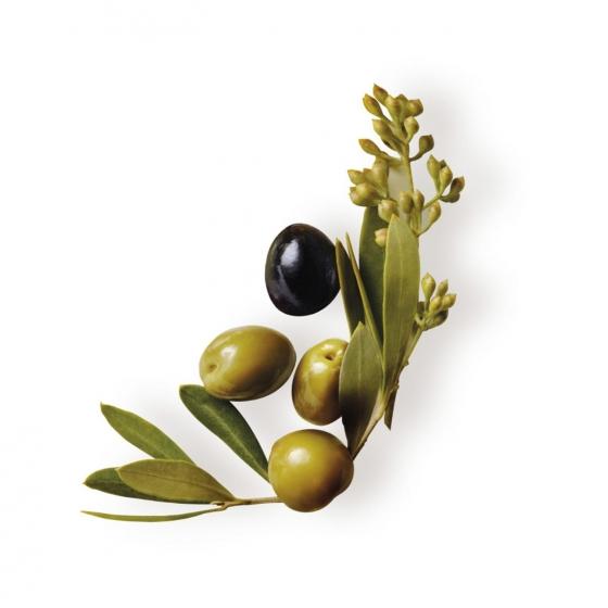 Champú nutritivo con aceite de oliva virgen Original Remedies 300 ml. - 3