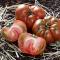 Tomate Raff  Premium granel