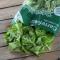 Brote batavia verde