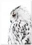 Panorama® Cuadro De Aluminio Lechuza Derecha 50x70cm   Impreso En Aluminio Dibond Blanco De Alta Calidad   Cuadros De Animales   Cuadros Decoración Salón   Cuadros Dormitorio Modernos   Cuadros Zen