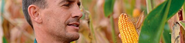 Trabajamos con más de 110 productores locales que nos garantizan la frescura diaria de la verdura de hoja