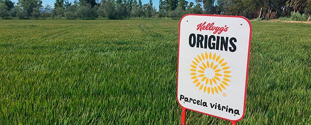 2ª -50% Nutribén crecimiento y cereales